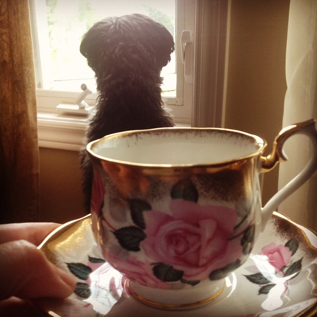 Window watching with Royal Albert. Email if interested. Prices & pics at teacup-treasure.com/catalogue #teacup #royalalbert #gold #pink #roses