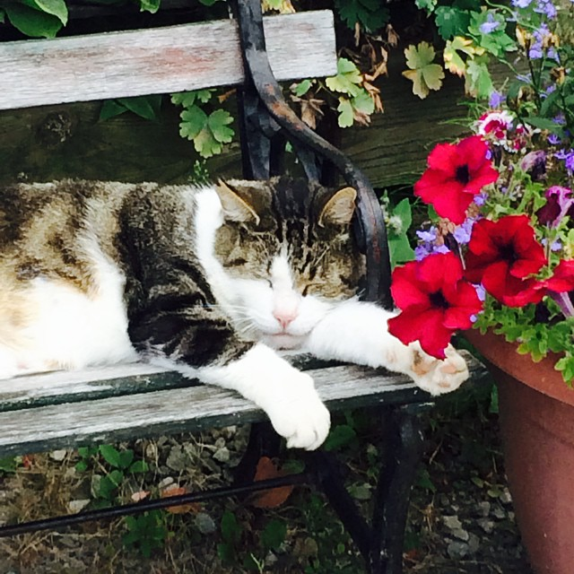 Envious of this furry feline who found the perfect spot outside an antique mall. #cat #flowers #catnap #kittybliss